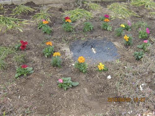 花の植え替え_a0158095_14324667.jpg