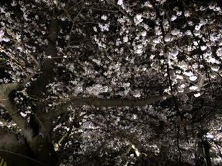 2014年の桜(4)_b0129897_943221.jpg