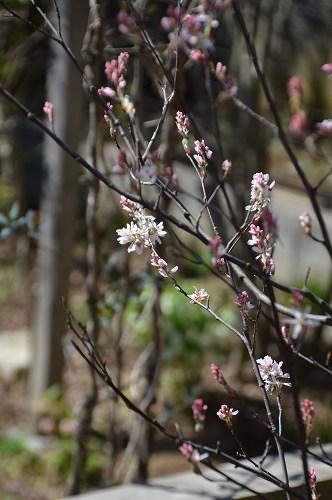 ジュンベリーの花 など_c0124100_21551246.jpg