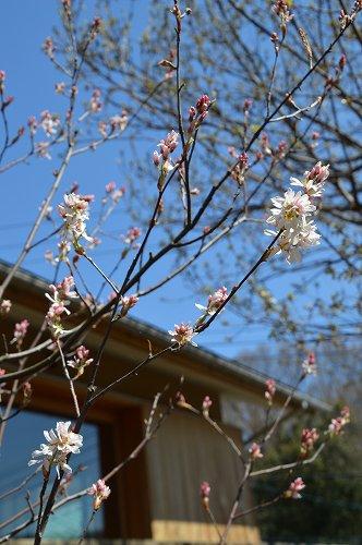 ジュンベリーの花 など_c0124100_21554132.jpg