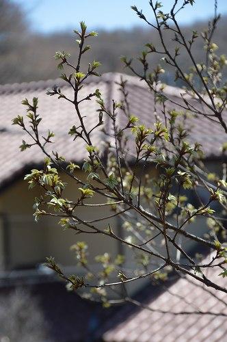 ジュンベリーの花 など_c0124100_21561547.jpg