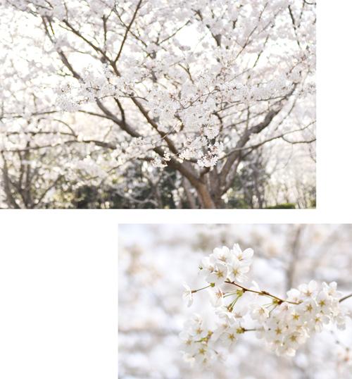 お花見弁当と、さくら散歩。_d0174704_13585453.jpg