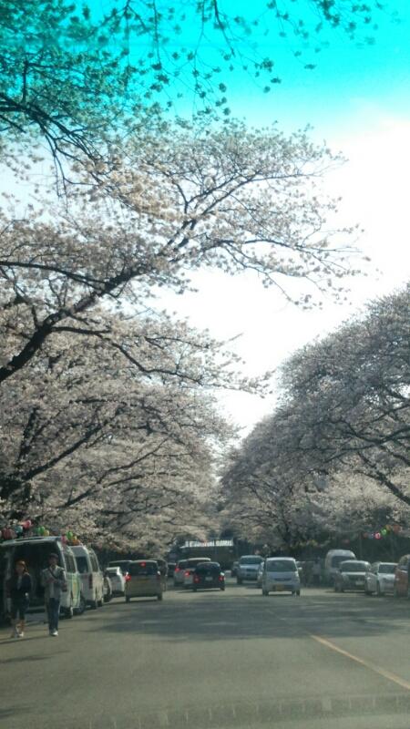 桜_e0001906_2330425.jpg