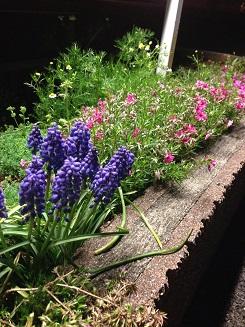 春がきた♪_d0165410_19181019.jpg