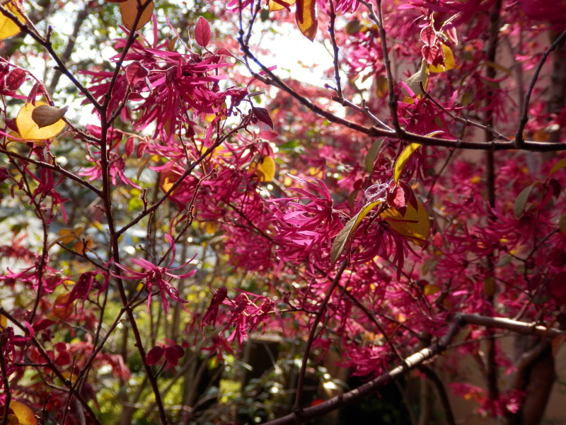 春の柳川の旅_a0125419_06554280.jpg