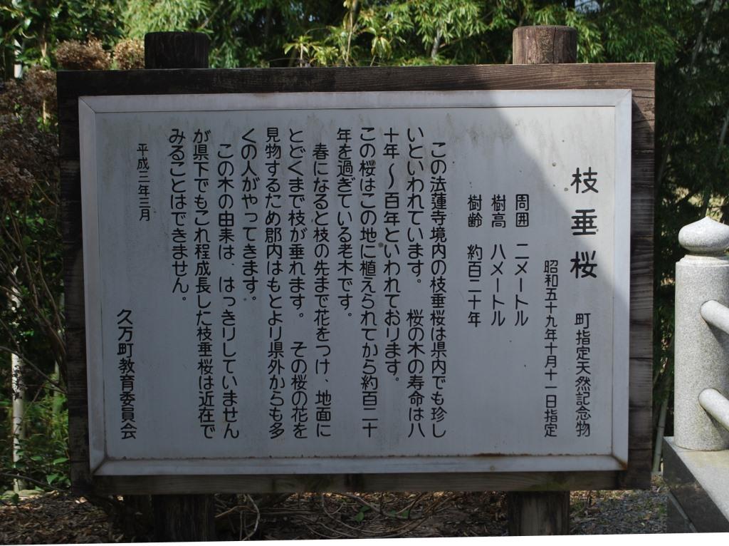 枝垂桜と分蜂騒ぎ_f0176521_22231331.jpg