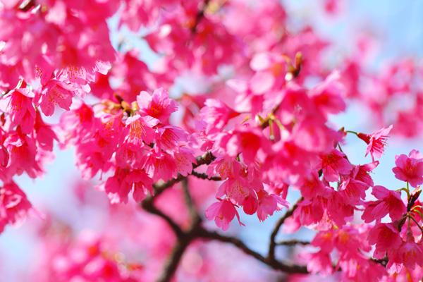 きょうの桜2_b0175635_23454742.jpg