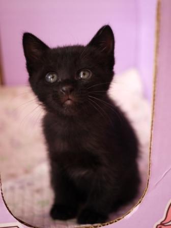 はじめてのお誕生日猫 てぃぁら1歳編。_a0143140_0173957.jpg