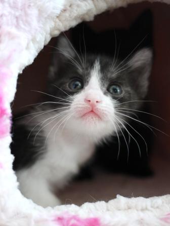 はじめてのお誕生日猫 みるきぃ1歳編。_a0143140_0195152.jpg