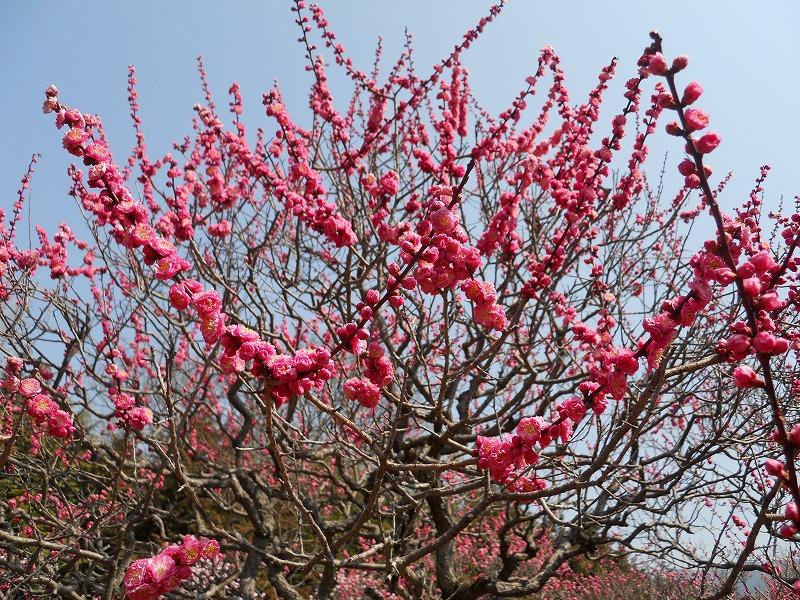 春のバス旅行_c0113948_1515649.jpg
