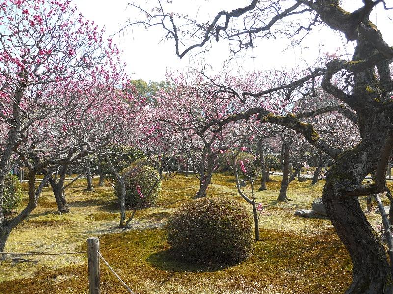 春のバス旅行_c0113948_1522628.jpg