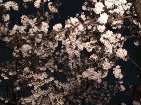 夜桜見物_c0034850_22343460.jpg