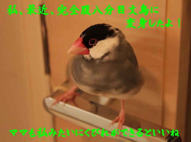 b0158061_2141585.jpg