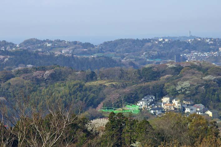満開のオオシマザクラが4・5「北鎌倉ウォッチング」出迎えへ_c0014967_2202436.jpg