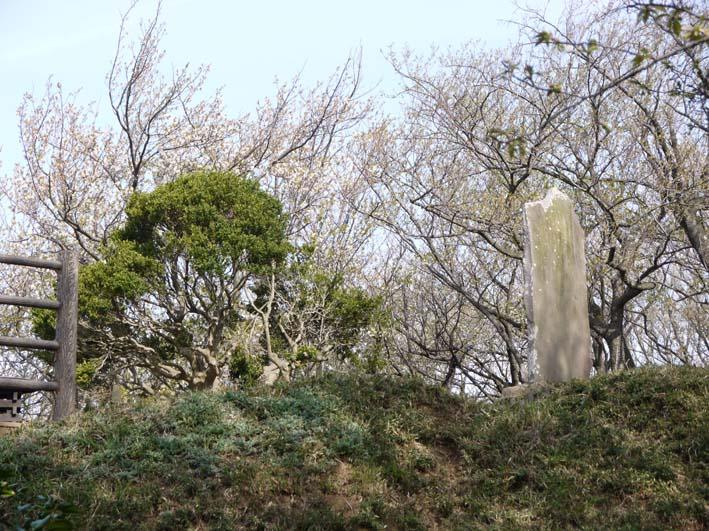 満開のオオシマザクラが4・5「北鎌倉ウォッチング」出迎えへ_c0014967_2223631.jpg