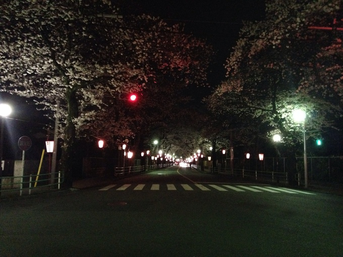 桜満開_b0219170_12464044.jpg