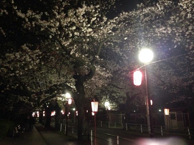 桜満開_b0219170_12484761.jpg