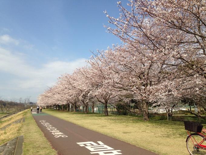 桜満開_b0219170_12543747.jpg