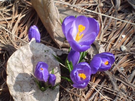 春は音もなくやって来る_a0025572_23592370.jpg