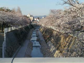 今年のお花見・妙法寺川_a0098174_0282993.jpg
