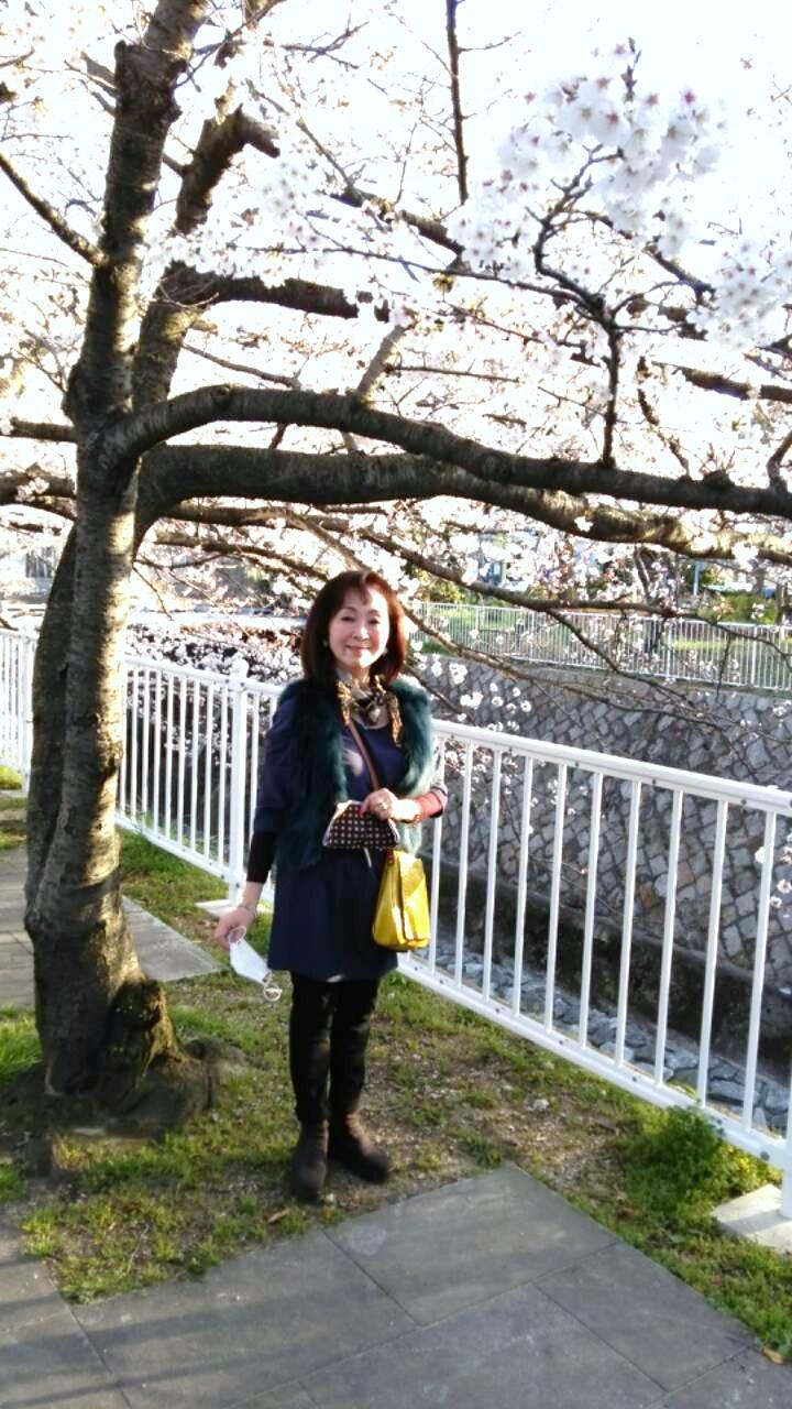 今年のお花見・妙法寺川_a0098174_0311027.jpg