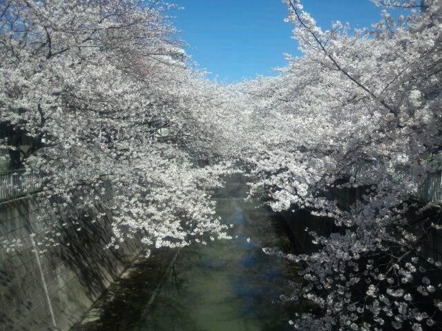 お花見日和_d0079577_15425236.jpg