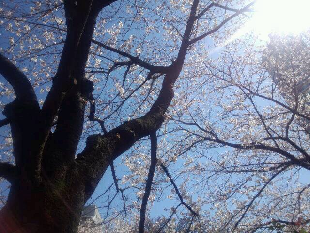 お花見日和_d0079577_15432152.jpg