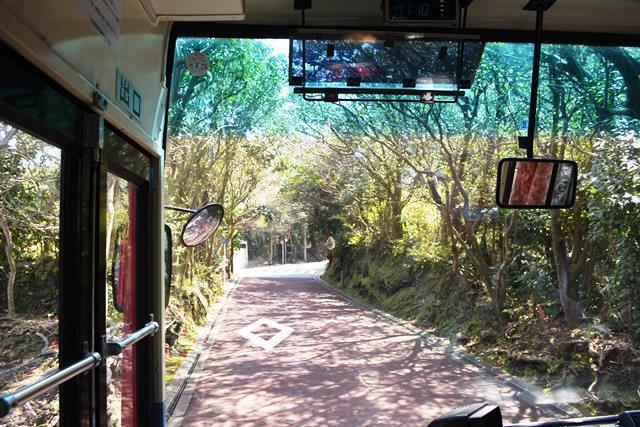 伊豆大島 あんこさん、桜に椿にウサギも!春に出会う日帰り島旅へ_b0053082_12232565.jpg