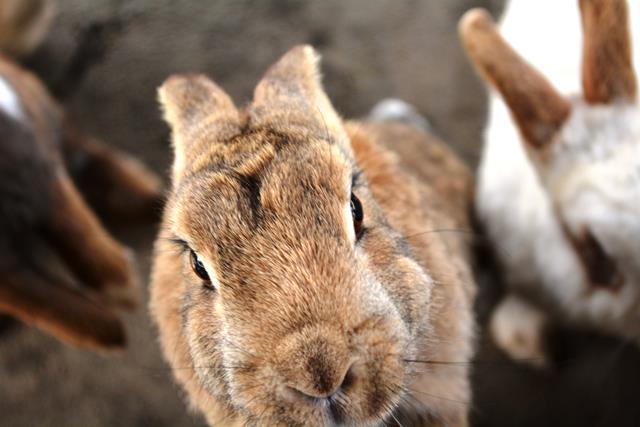 伊豆大島 あんこさん、桜に椿にウサギも!春に出会う日帰り島旅へ_b0053082_13152756.jpg