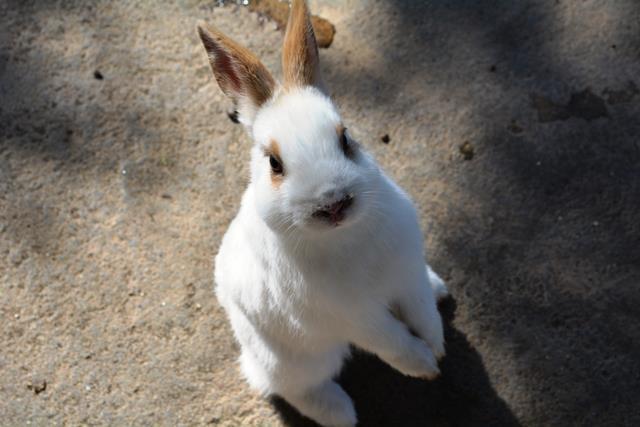 伊豆大島 あんこさん、桜に椿にウサギも!春に出会う日帰り島旅へ_b0053082_13153761.jpg