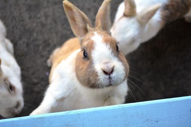 伊豆大島 あんこさん、桜に椿にウサギも!春に出会う日帰り島旅へ_b0053082_13154823.jpg