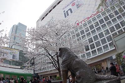 4月2日(水)の渋谷109前交差点_b0056983_1134996.jpg