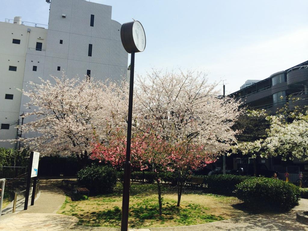 桜満開♪_d0208992_17204712.jpg