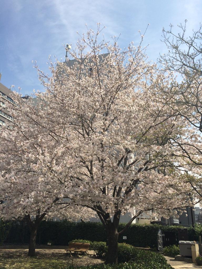 桜満開♪_d0208992_1721926.jpg