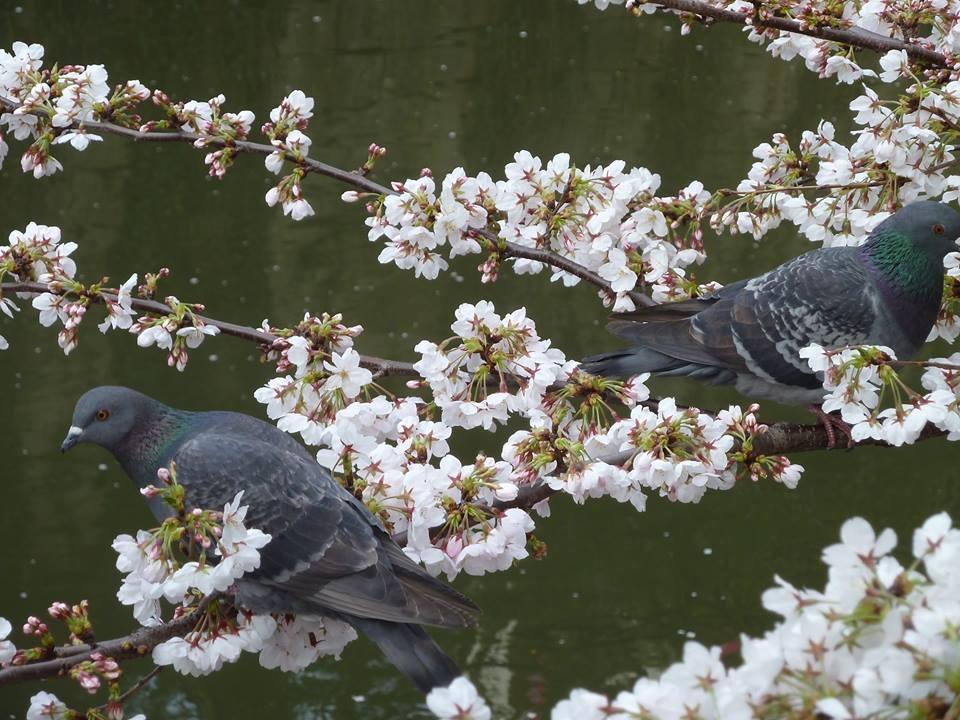 中目黒の桜_c0092197_058428.jpg