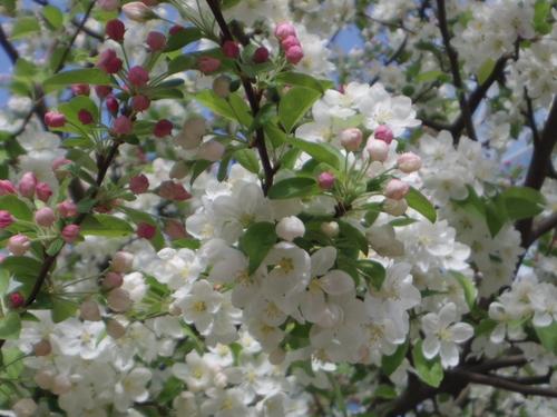 ラデファンスの花いっぱいの春_e0123104_13531893.jpg