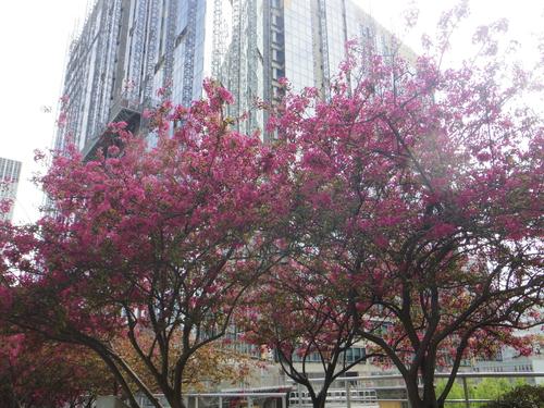 ラデファンスの花いっぱいの春_e0123104_13543964.jpg