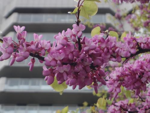 ラデファンスの花いっぱいの春_e0123104_13551815.jpg