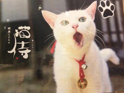 鎧と猫と童画と_e0239908_1171695.jpg
