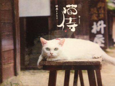 鎧と猫と童画と_e0239908_1171817.jpg