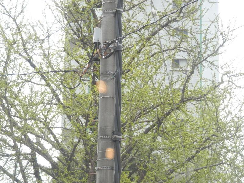 気が付けば街も「緑」に。_a0125419_19551129.jpg