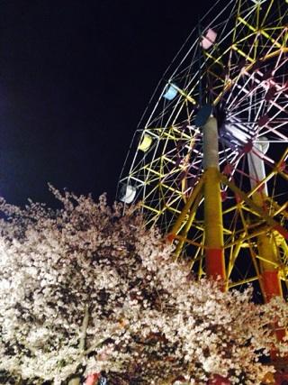🌸桜🌸_a0112220_1946048.jpg
