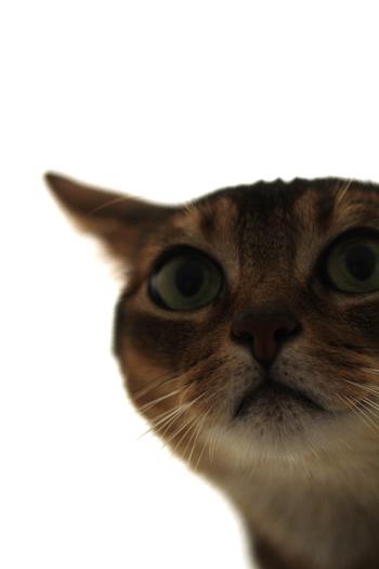 [猫的]Untitled series_e0090124_0235211.jpg