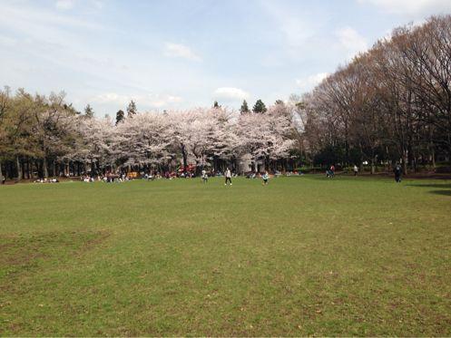 🌸みんなでお花見🌸_b0203925_13265870.jpg