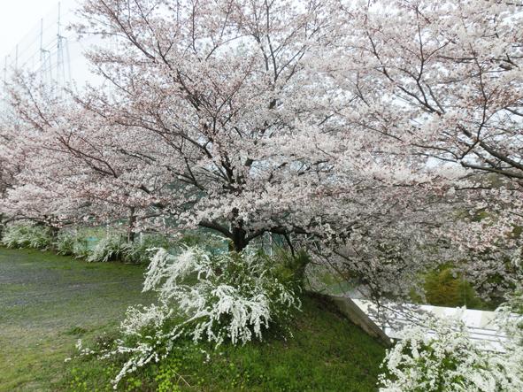 春色_f0045132_18352285.jpg