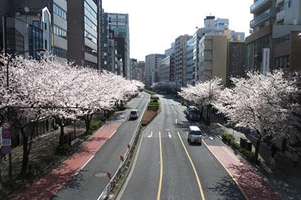 広尾の桜2014その2_f0165332_2055479.jpg