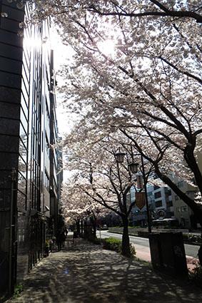 広尾の桜2014その2_f0165332_2055854.jpg