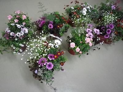 春ですね_e0086738_2325206.jpg