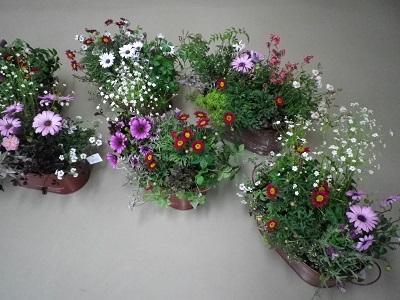 春ですね_e0086738_2325289.jpg