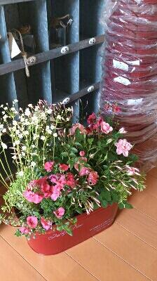 春ですね_e0086738_2331350.jpg